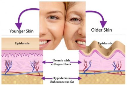Are Collagens Able to Reverse Aging Process?