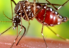 Medical Solution For Zika Virus – A Breakthrough In Medicinal History