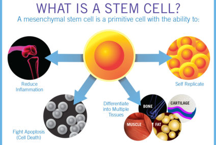 Why Stem Cell Research Is Important